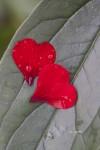 blomster-hjerte-084-kopi